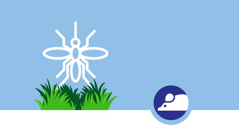 Allontanare le zanzare dal giardino