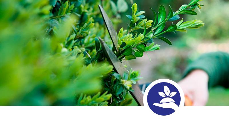 Impresa di Giardinaggio Palermo