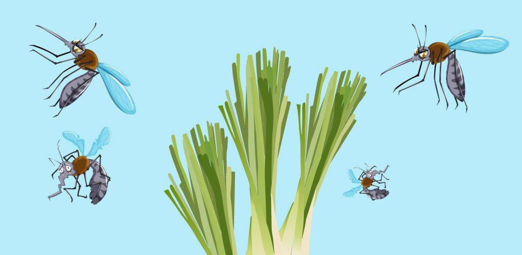 La citronella contro le zanzare